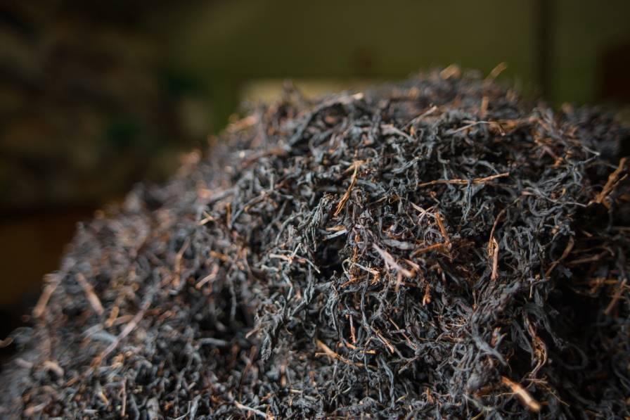 где растет цейлонский чай