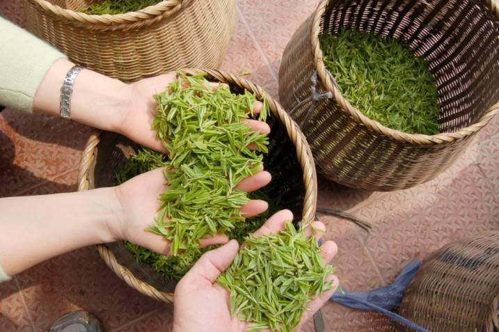 изготовление чай лунцзин