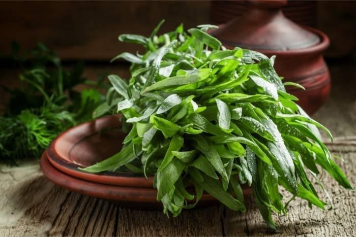 Польза травы тархун для мужского здоровья