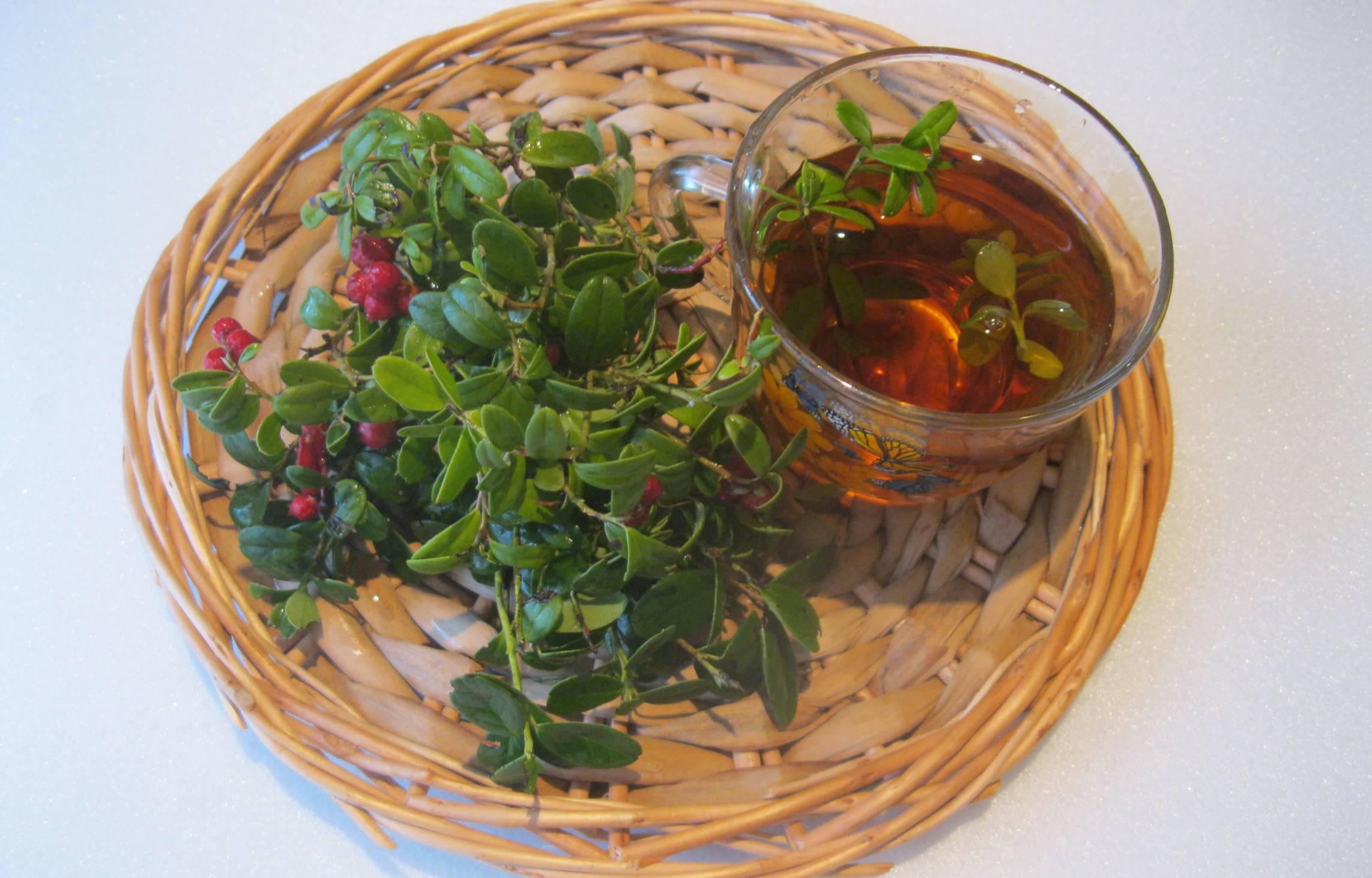 Чай из брусничных листьев