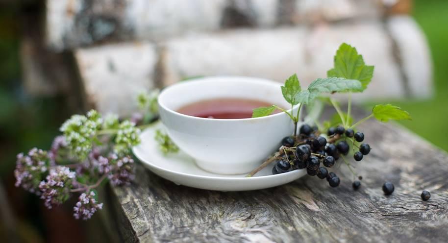 как заварить чай из смородины