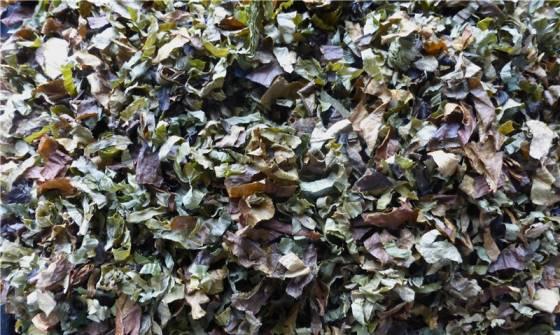 листья груши свойства