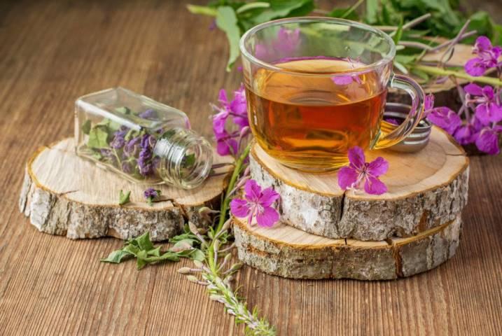 Иван-чай или кипрей: как заваривать и пить