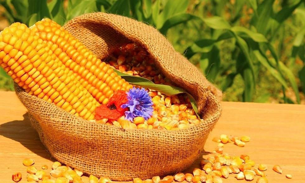 Отвар кукурузы