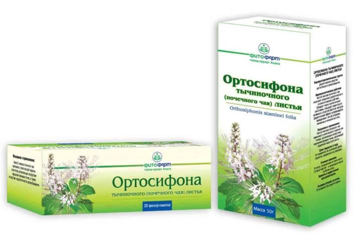 Полезные свойства почечного чая Ортосифон