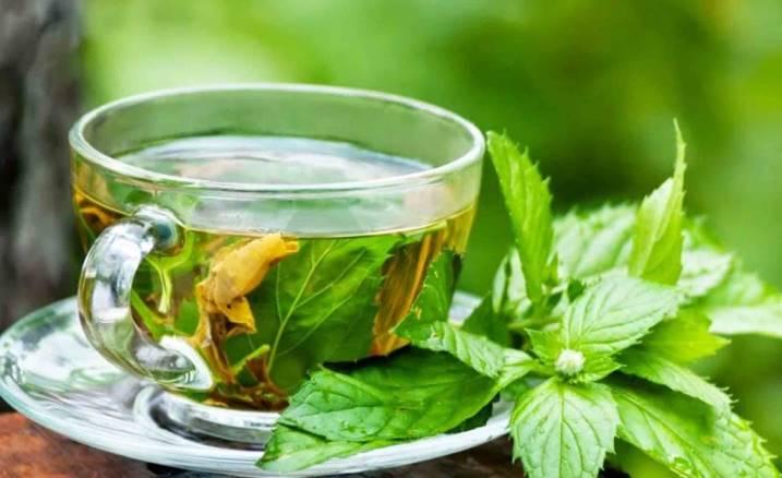 Можно ли беременным пить чай с мятой